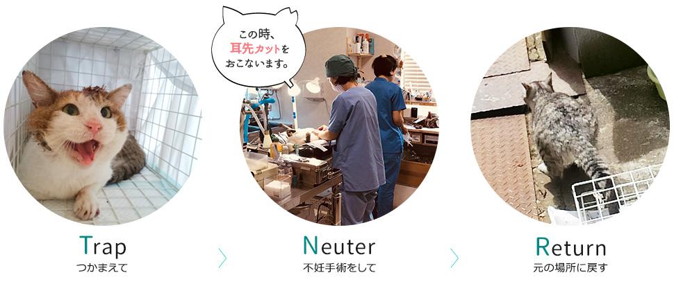 Trap(つかまえて)>Neuter(不妊手術をして)>R(元の場所に戻す)